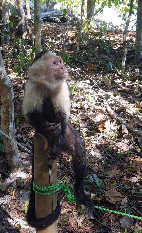 4A - Manuel Antonio (1 of 2) Monkey