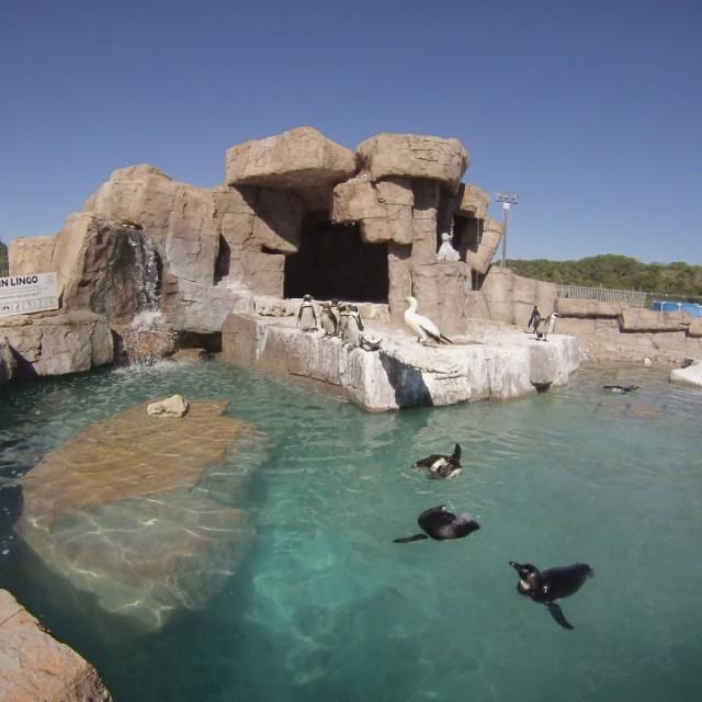 Robinson-Port-Elizabeth-Set-2-Spring-2015-penguins-swimming-640x640