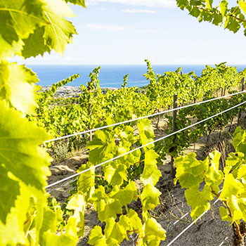 Wine, Gastronomy & Sustainability Traveling Seminar